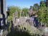 garden_roof_5