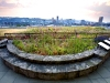 green_roof_3